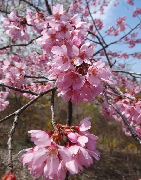 花の山14.jpg