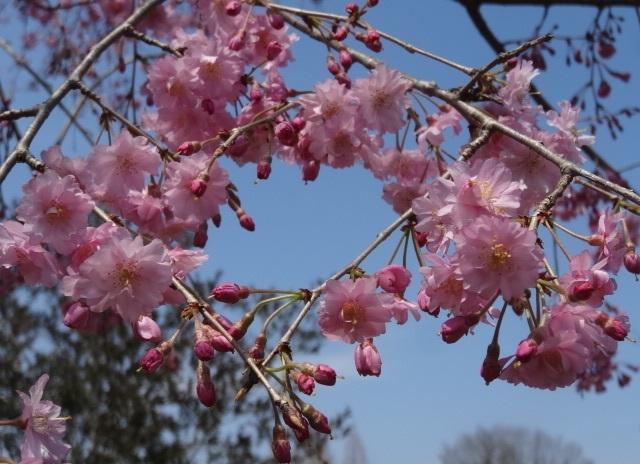 花の山15.jpg