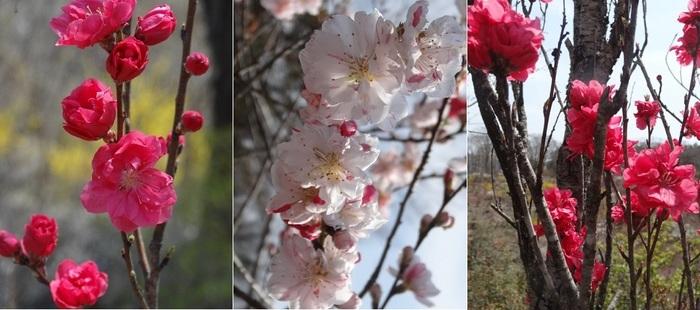 花の山4.jpg