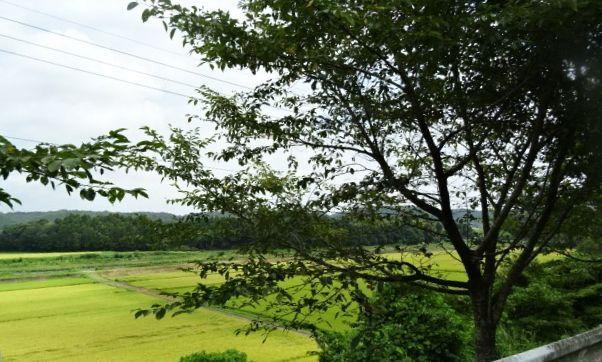那珂川2.jpg