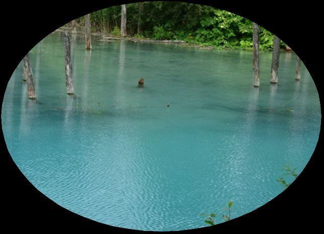 青い池3.jpg