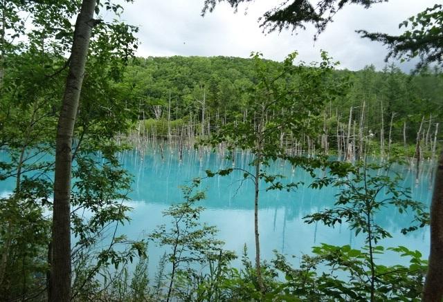 青い池4.jpg