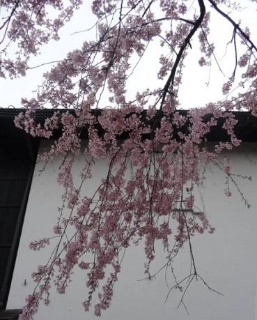 飛騨古川7.jpg