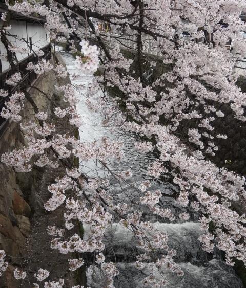 高山1.jpg